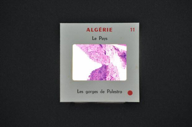 diapositive - Algérie. Les gorges de Palestro
