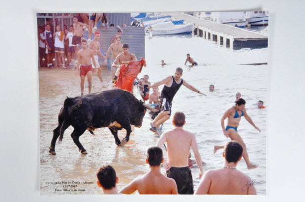 photographie - Toros en la mare en Denia - Alicante