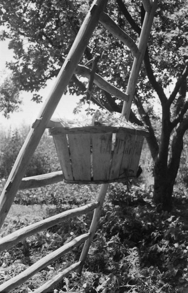 photographie - MNATP. Mission conduite par Marcel Maget et André Varagnac en Provence (novembre 1938)