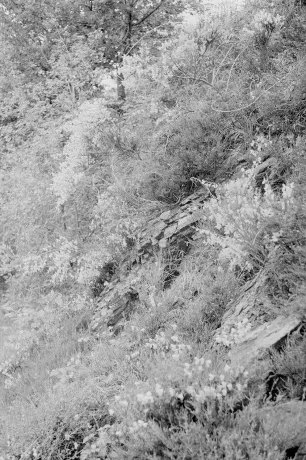 photographie - MNATP. Recherches coopératives sur programme sur l'Aubrac (1964-1966). 1ère mission (20-30 mai 1964)