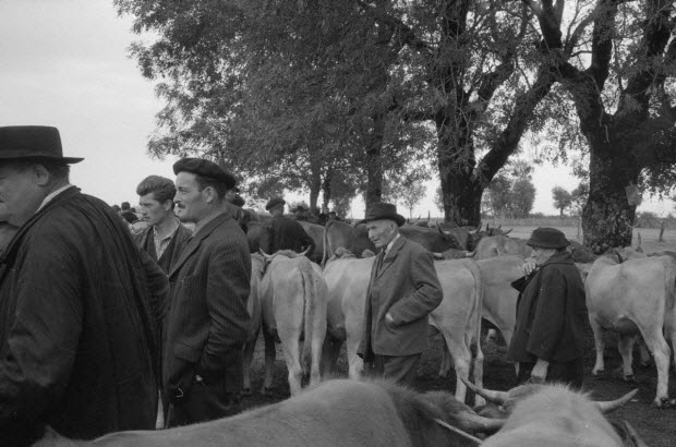 photographie - MNATP. Recherches coopératives sur programme sur l'Aubrac (1964-1966)