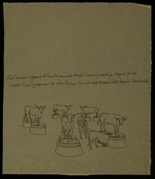 partie d'un ensemble de dessins - Les Taureaux espagnols de Don Raymondo Benzal