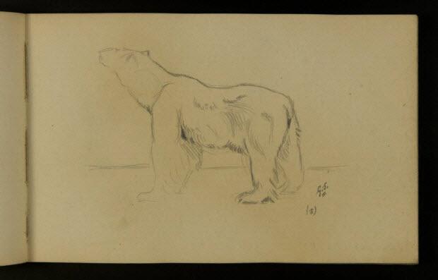carnet de dessins - Ours blanc