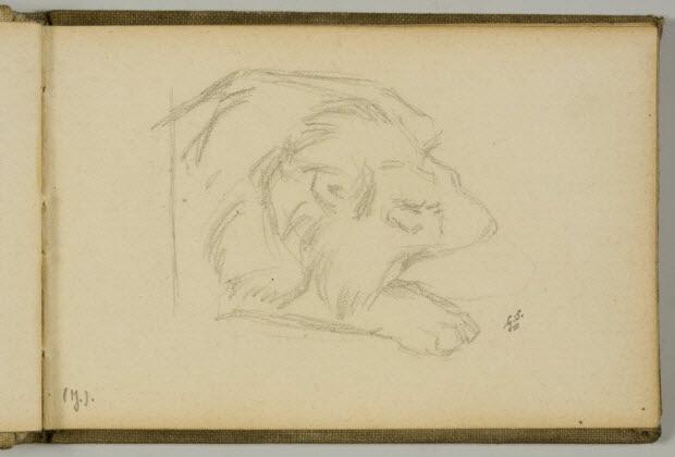 carnet de dessins - Etude de lion