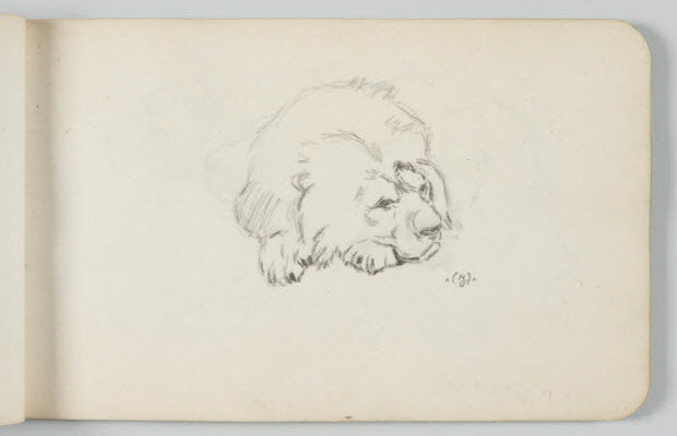 carnet de dessins - Lion au repos