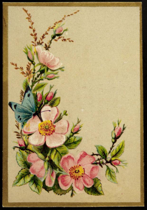 carte réclame - Petites roses et papillon