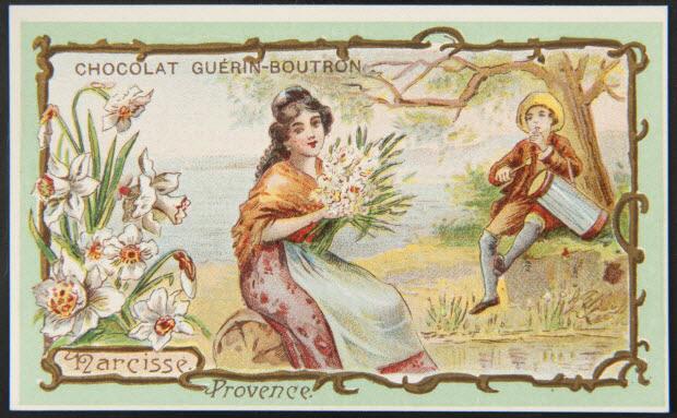 carte réclame - Narcisse. Provence.