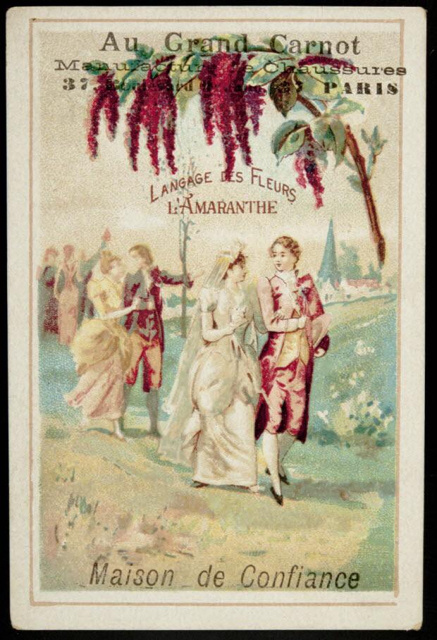 carte réclame - Langage des Fleurs L'AMARANTHE