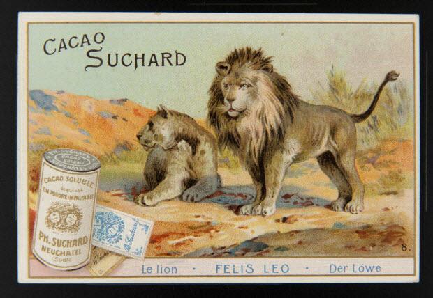 carte réclame - Le lion . FELIS LEO . Der Löwe 8.