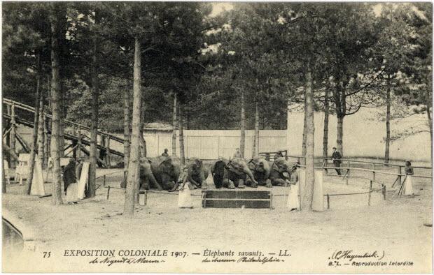 57. Exposition coloniale 1907 de Nogent-sur-Marne. Eléphants savants présentés par le dresseur Philadelphia (C. Hagenbeck)