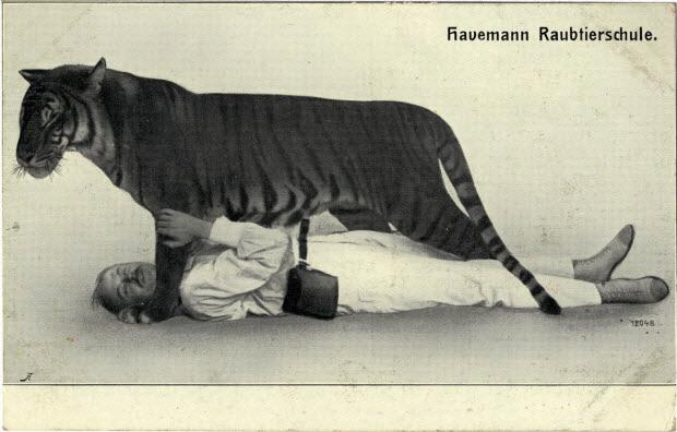 Havemann's Raubtierschule.