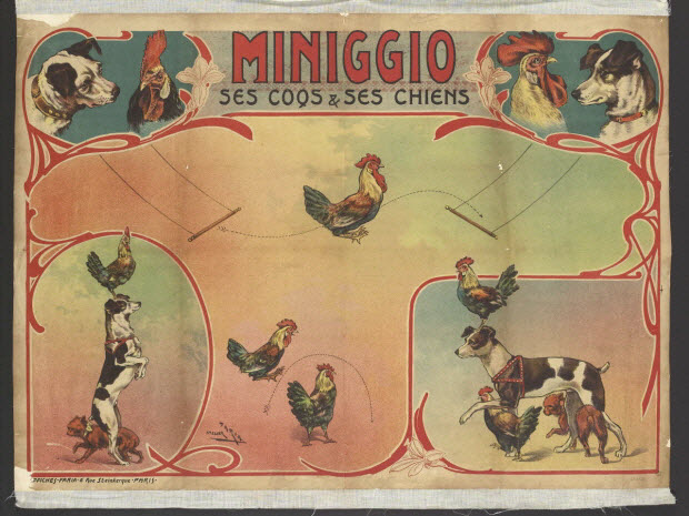 affiche - MINIGGIO SES COQS & SES CHIENS