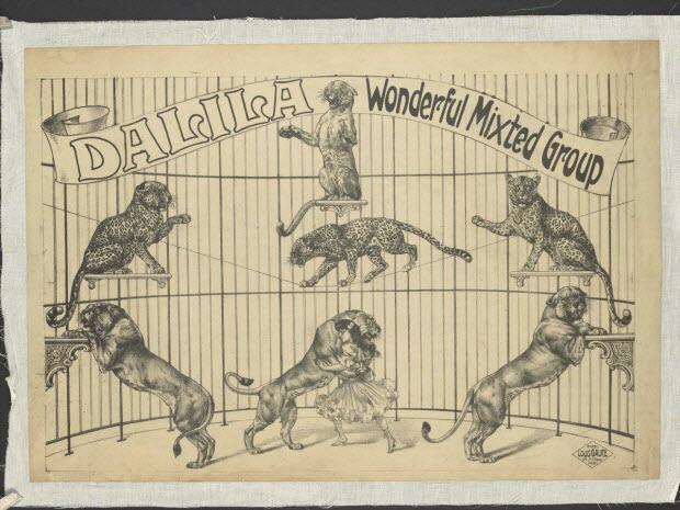 affiche - DALILA Wonderful Mixted Group
