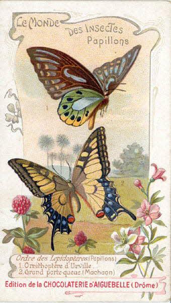 carte réclame - LE MONDE DES INSECTES Papillons Ordre des Lépidopterès (Papillons) 1 Ornithoptères d'Urville 2 Grand porte-queue