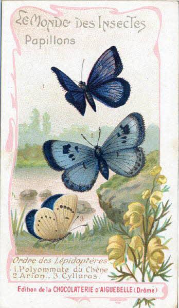 carte réclame - LE MONDE DES INSECTES Papillons Ordre des Lépidoptères 1 Polyommate du Chene 2 Arion 3 Cyllaras