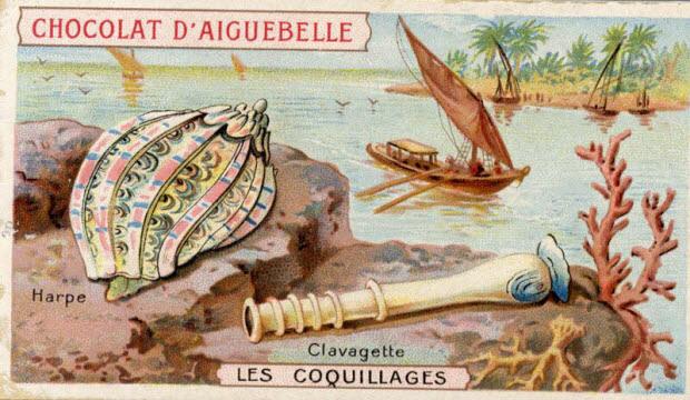 carte réclame - LES COQUILLAGES Harpe Clavagette