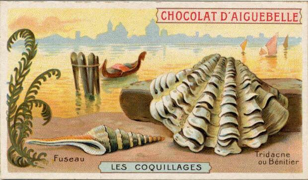 carte réclame - LES COQUILLAGES Fuseau Tridacne ou Bénitier
