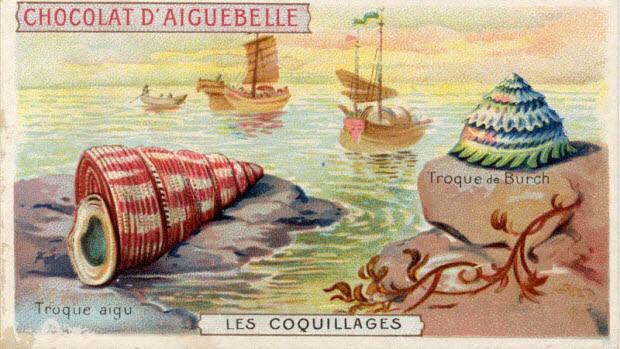 carte réclame - LES COQUILLAGES Troque aigu Troque de Burch