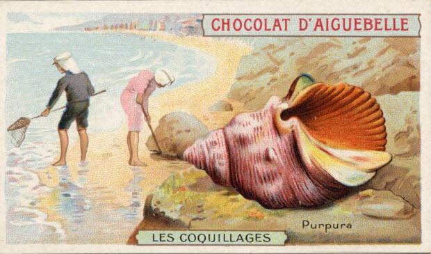carte réclame - LES COQUILLAGES Purpura