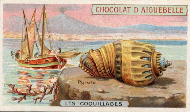 carte réclame - LES COQUILLAGES Pyrule