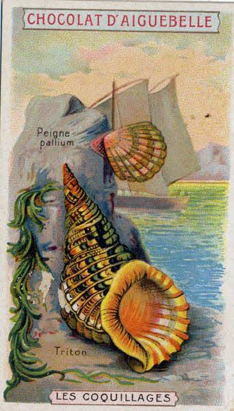 carte réclame - LES COQUILLAGES Peigne pallium Triton