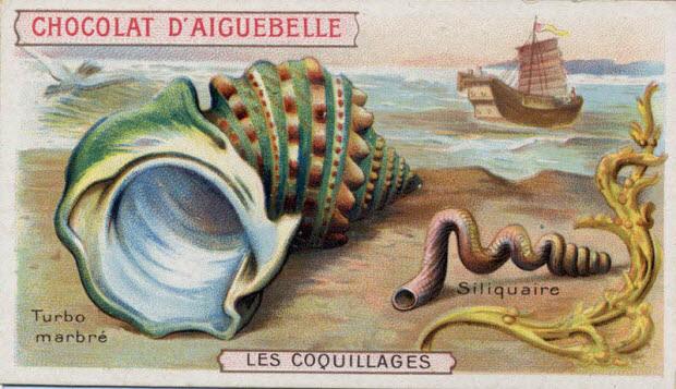 carte réclame - LES COQUILLAGES Turbo marbré Siliquaire