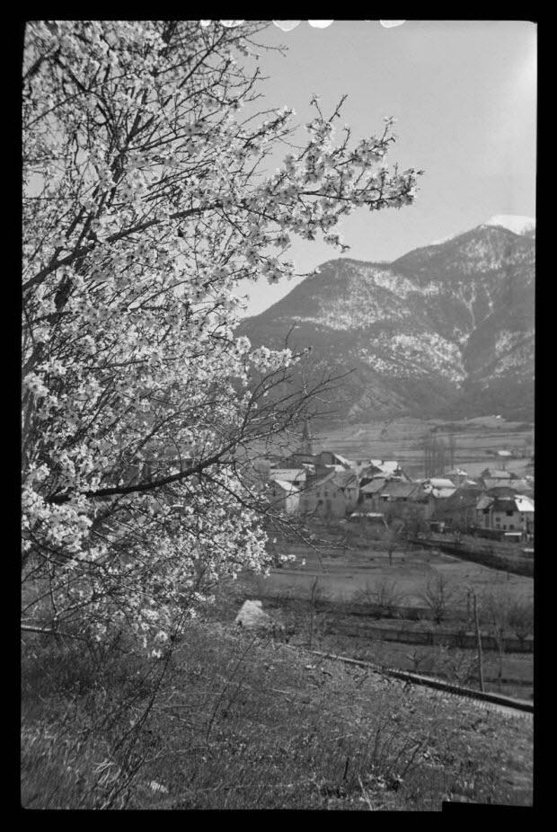 photographie - Village. Un arbre en fleur