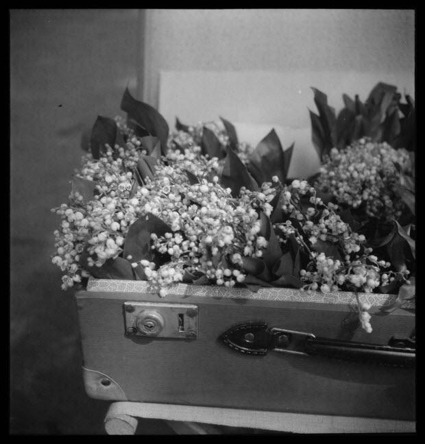 photographie - 18, boulevard Beaumarchais. Défilé du 1er mai 1946, fête du travail. De 14 heures à 19 heures. Gros plan de brin de muguet