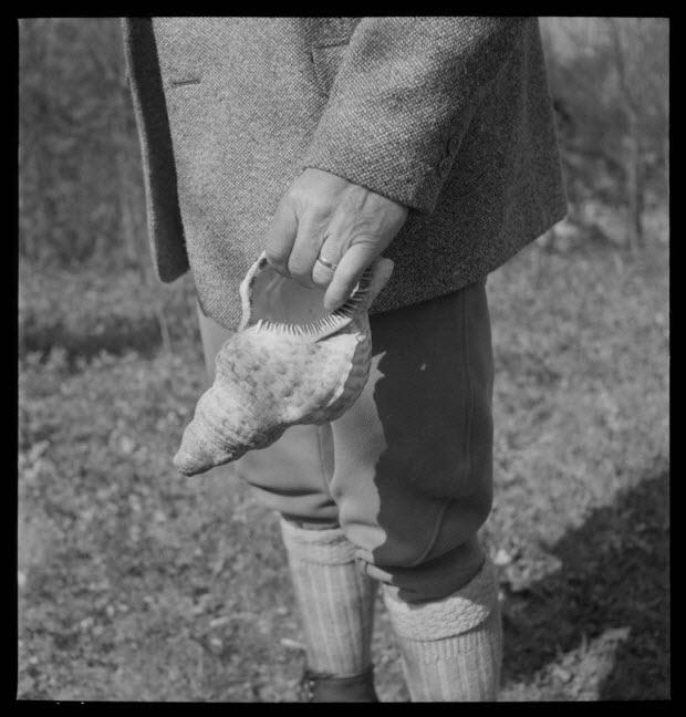 photographie - Domaine de Wideville. Conque servant à l'appel du cerf tenue en main par Monsieur Ernest Rèbre. Objet du MNATP, collection 1954.32