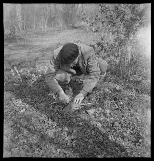 photographie - Domaine de Wideville. Monsieur Ernest Rèbre prépare une feuille de lierre qui va lui servir d'appeau