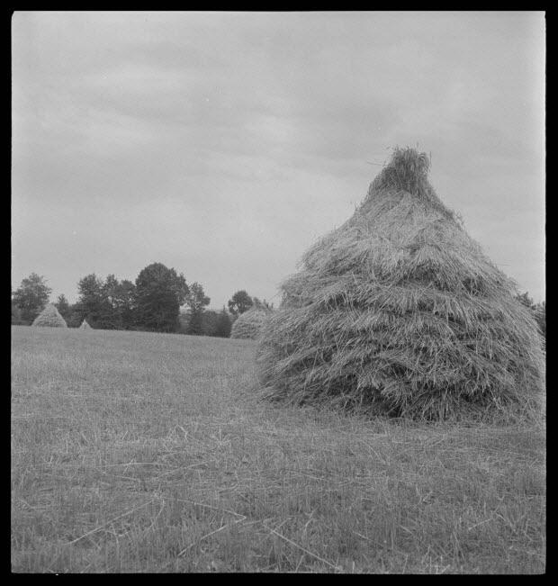 photographie - Tas de gerbe de blé